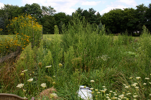 a garden overgrown with edible weeds