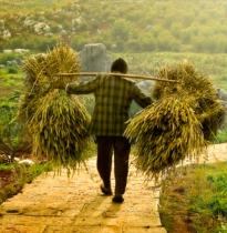 a man carrying bales