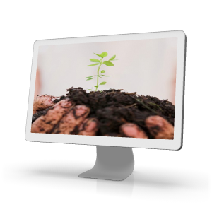 gnowfglins seedling on monitor