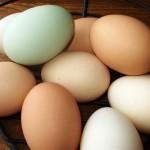 Fresh, organic, pastured eggs